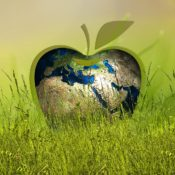 Viaggi d'affari sostenibili, aziende sempre più attente