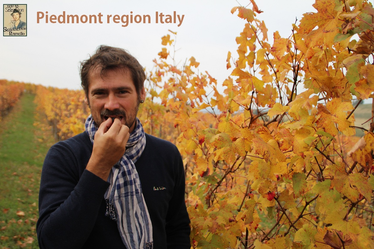 Piedmont Wine Travel for business